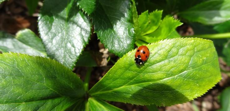 ladybug-1191298_1280