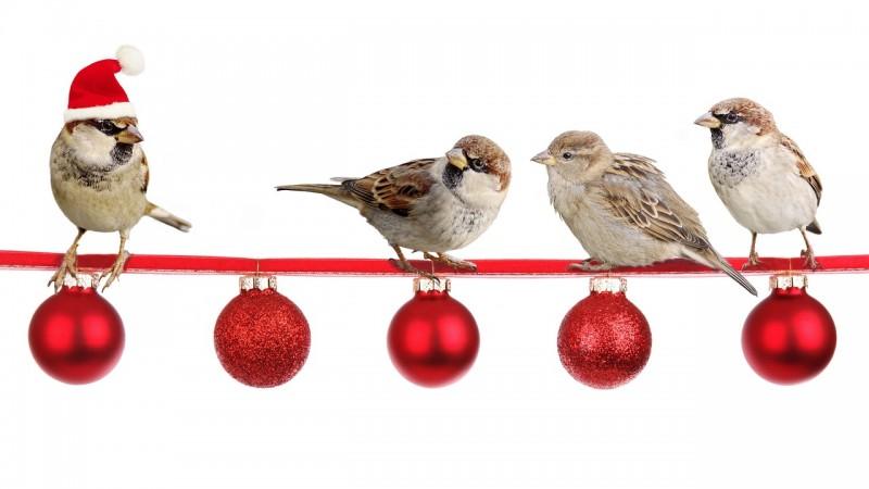 birds christmas